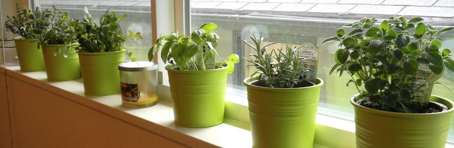 Window Sill Garden